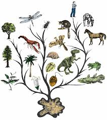 Evolutionary Tree of Life (From Google Images)