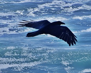 THE RAVEN  (Image from Google Images)