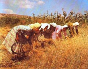 Women Reaping the Fields