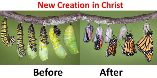 new-creation-2