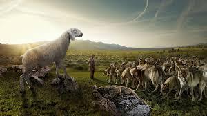 Lamb among Wolves